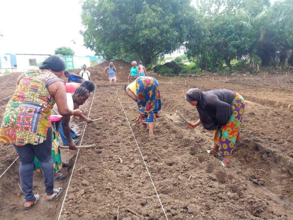 Women working in the farm